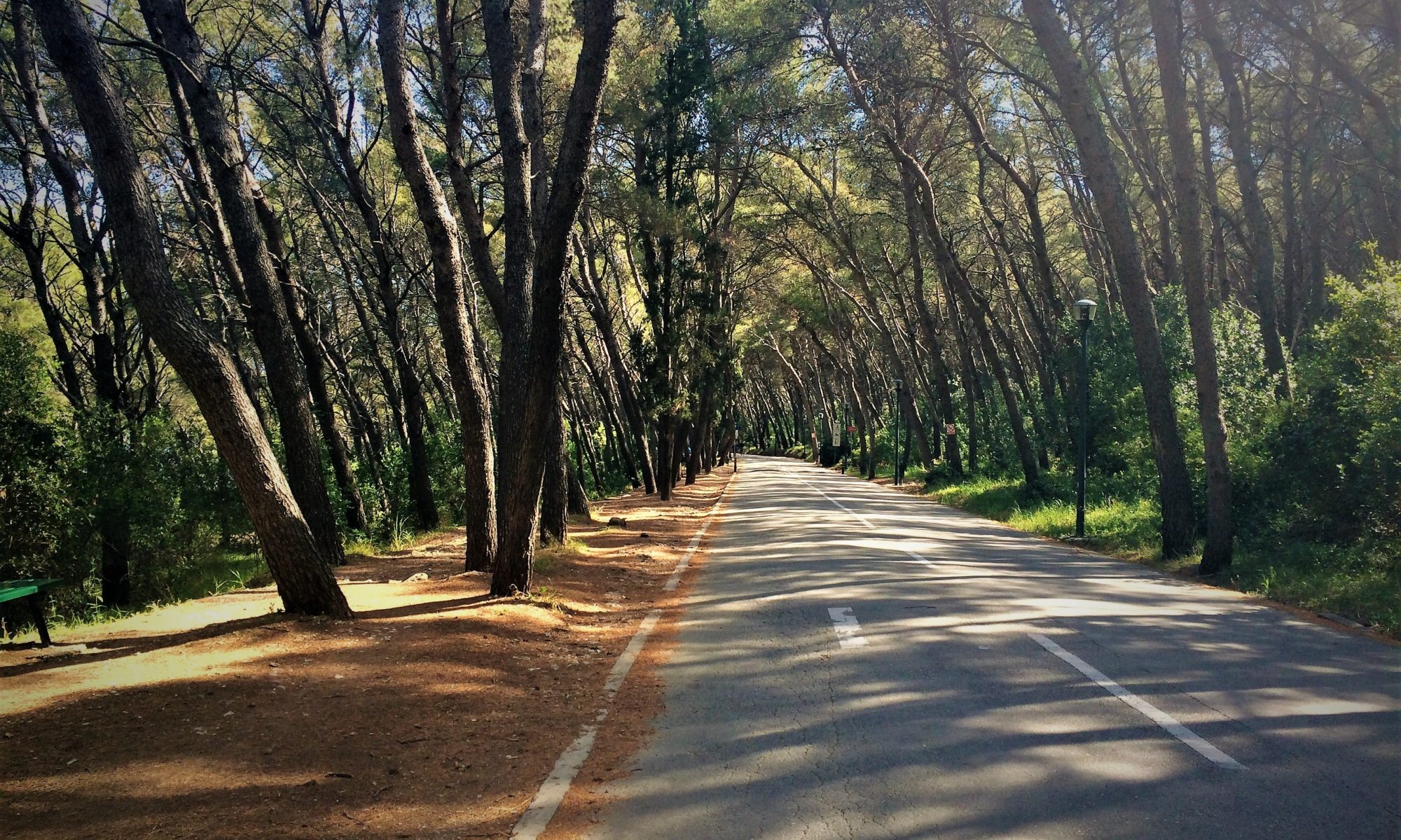the wide road through Marjan Forest park lined with trees